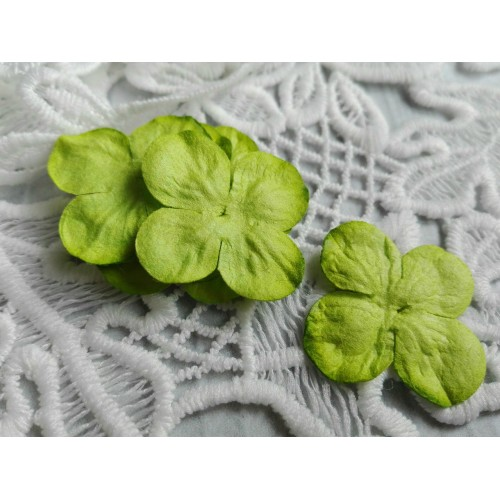 купить цветы Тайланд гортензии зеленые