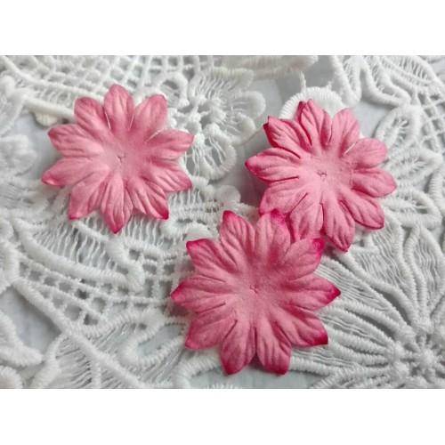 купить тайские цветы Маргаритки розовые
