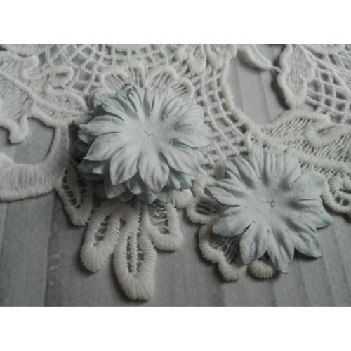 купить тайские цветы Маргаритки дымчато-голубые