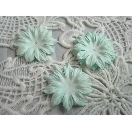 купить тайские цветы Маргаритки голубые
