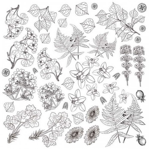 Листы для для раскрашивания Botany Summer