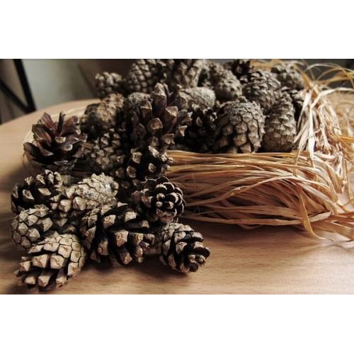Шишка еловая натуральная 2.5 - 3.5 см 10 шт
